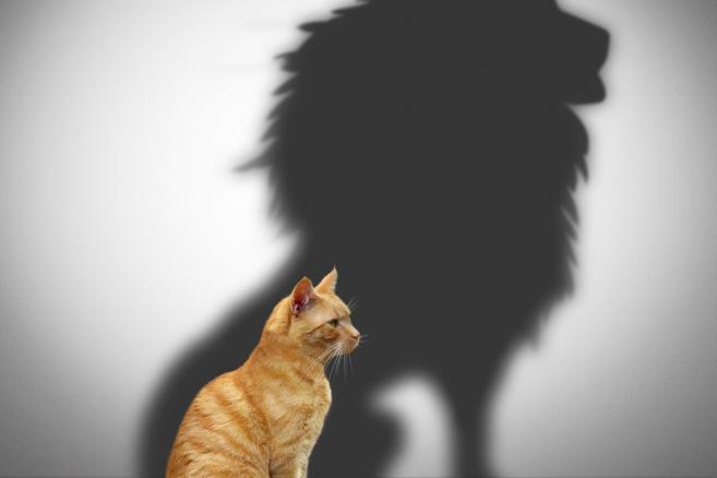 Kot i cień lwa