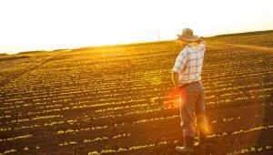 rolnik, rolnictwo, pole,uprawa, farmer