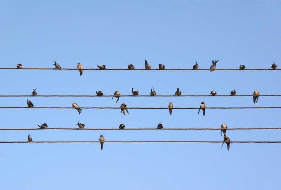 Ptaki siedzące na przewodach telefonicznych