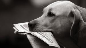 Pies z gazetą