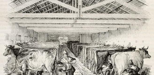 Forex biznes xxi wieku